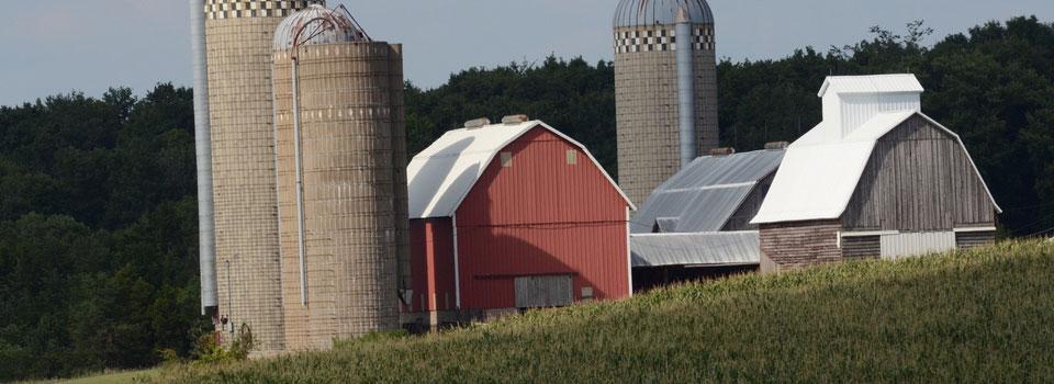 Dairy Farm near Poesta, IA, on Tuesday, Aug. 16, 2011. USDA Photo by Lance Cheung.